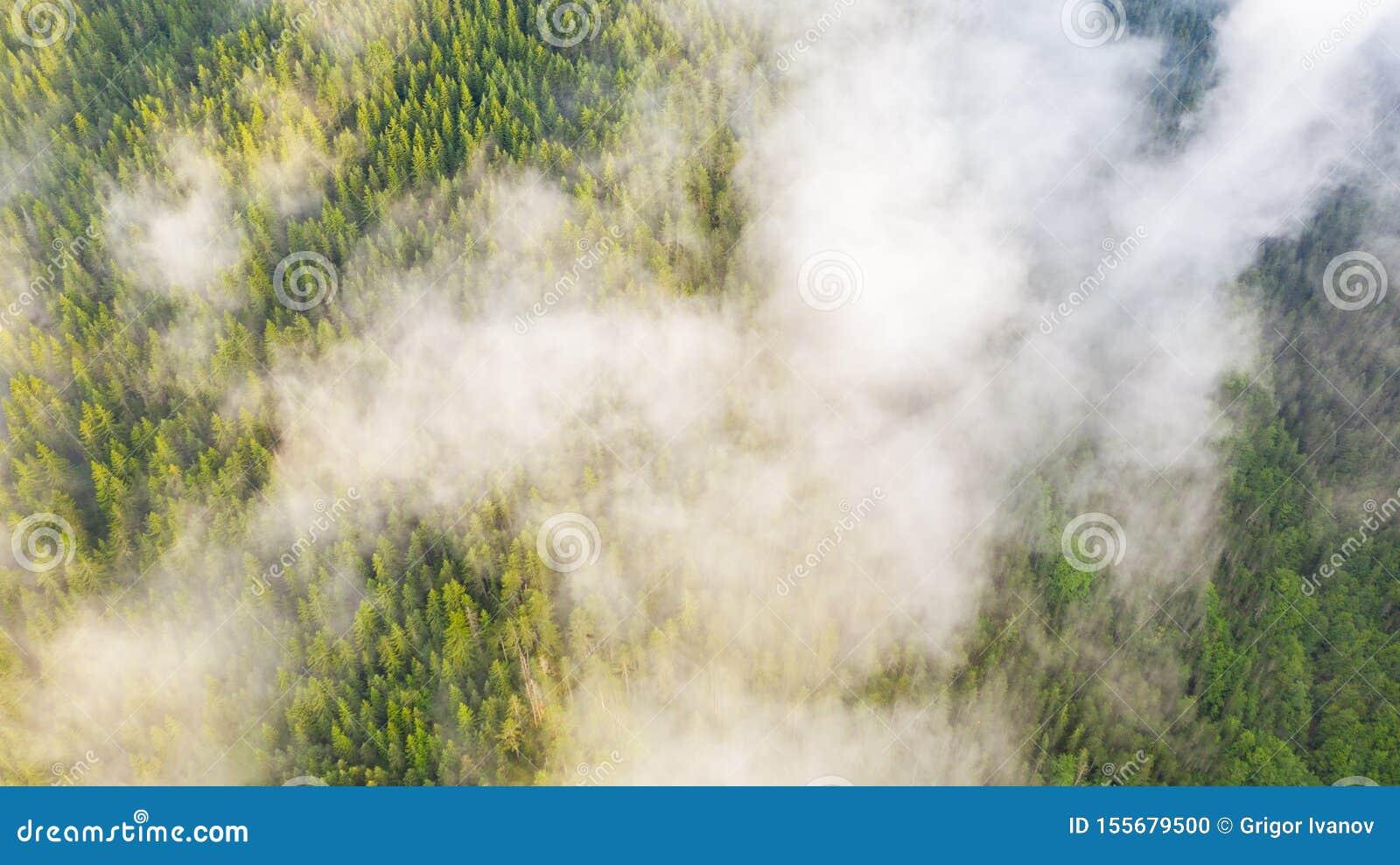 Flyg- sikt av den tropiska rainforesten som täckas av molnet och dimma