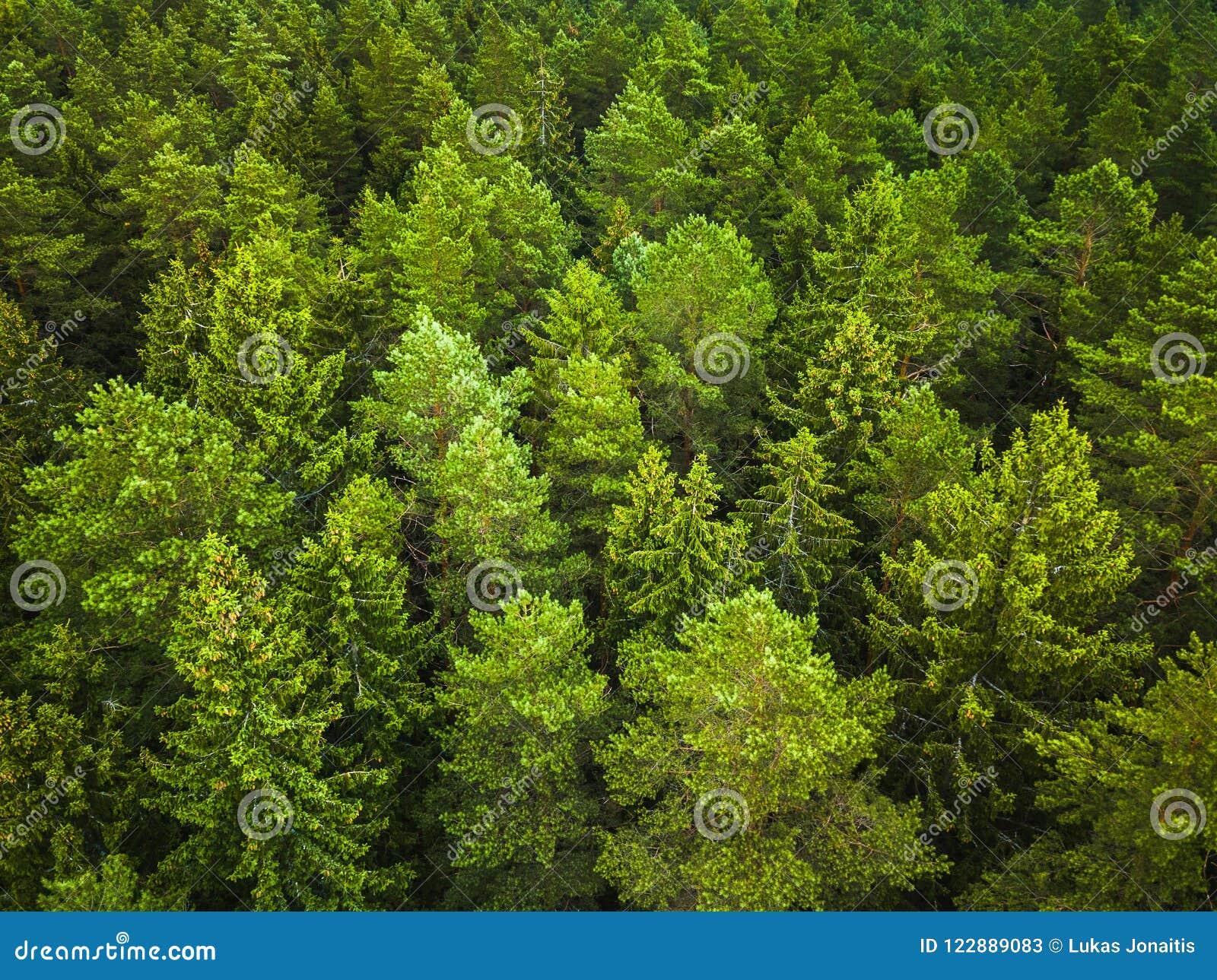 Flyg- sikt av skogen