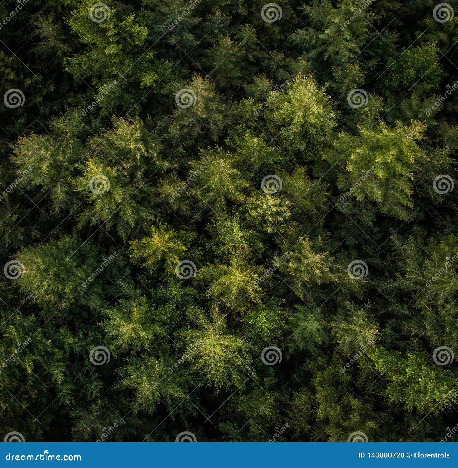 Flyg- sikt av träd i en skog
