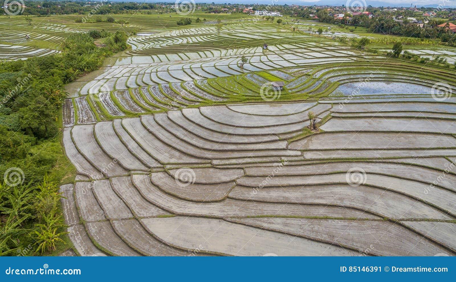 Flyg- sikt för risfält