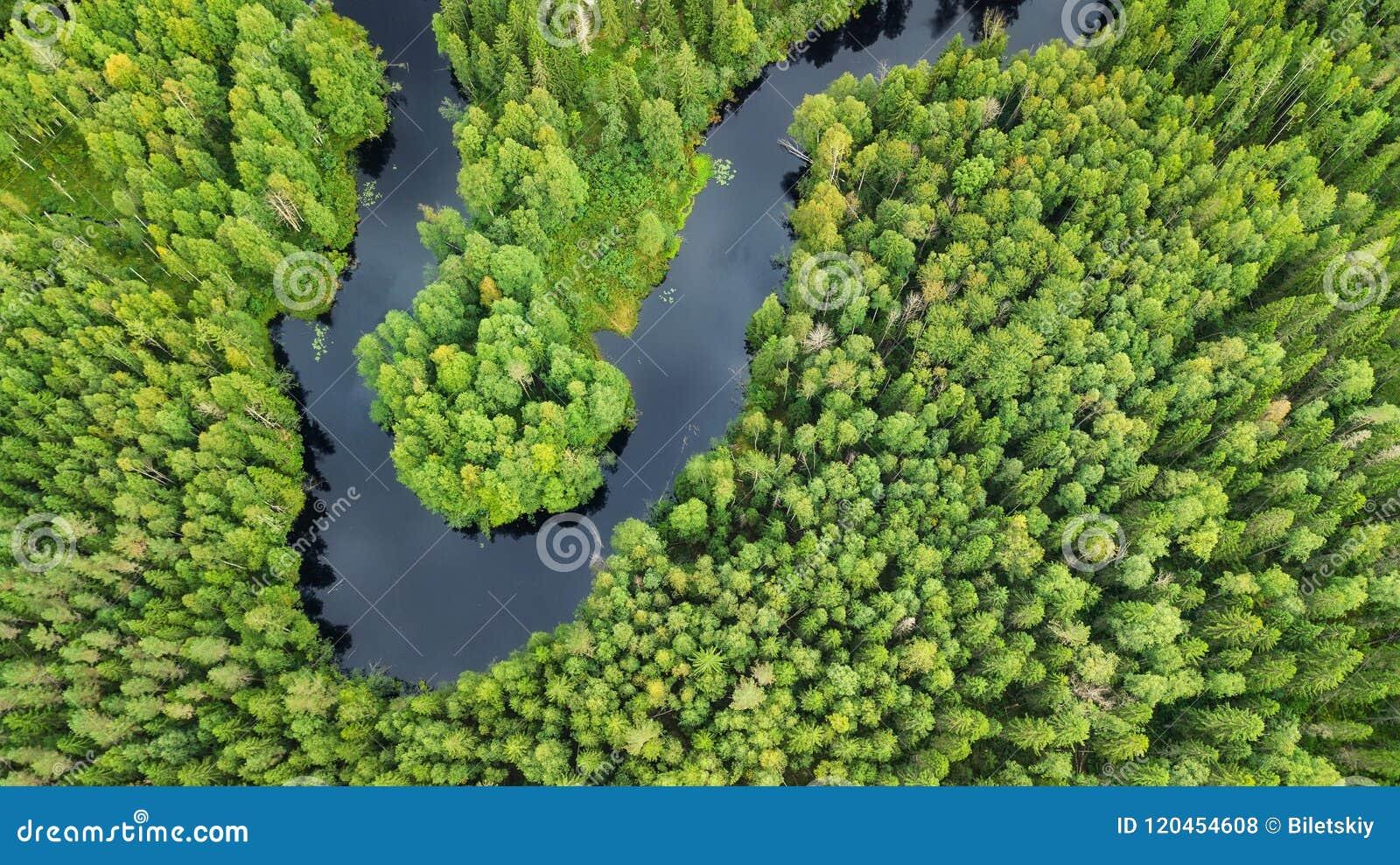 Flyg- sikt på skogen och floden