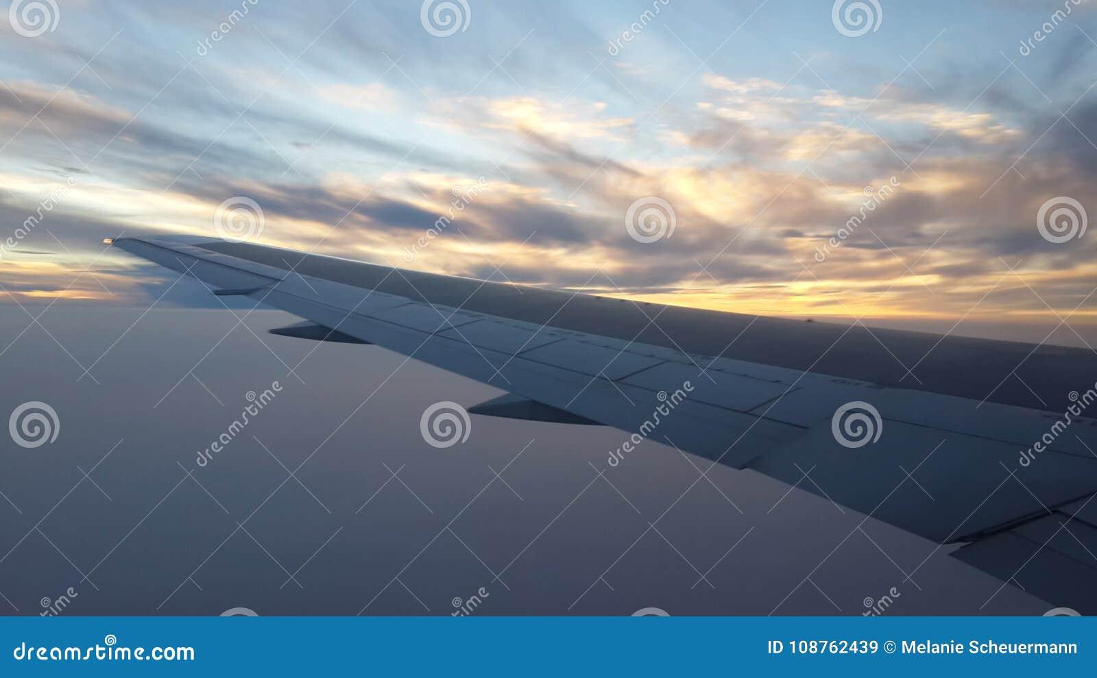 Flyga som är skyhögt på skymning