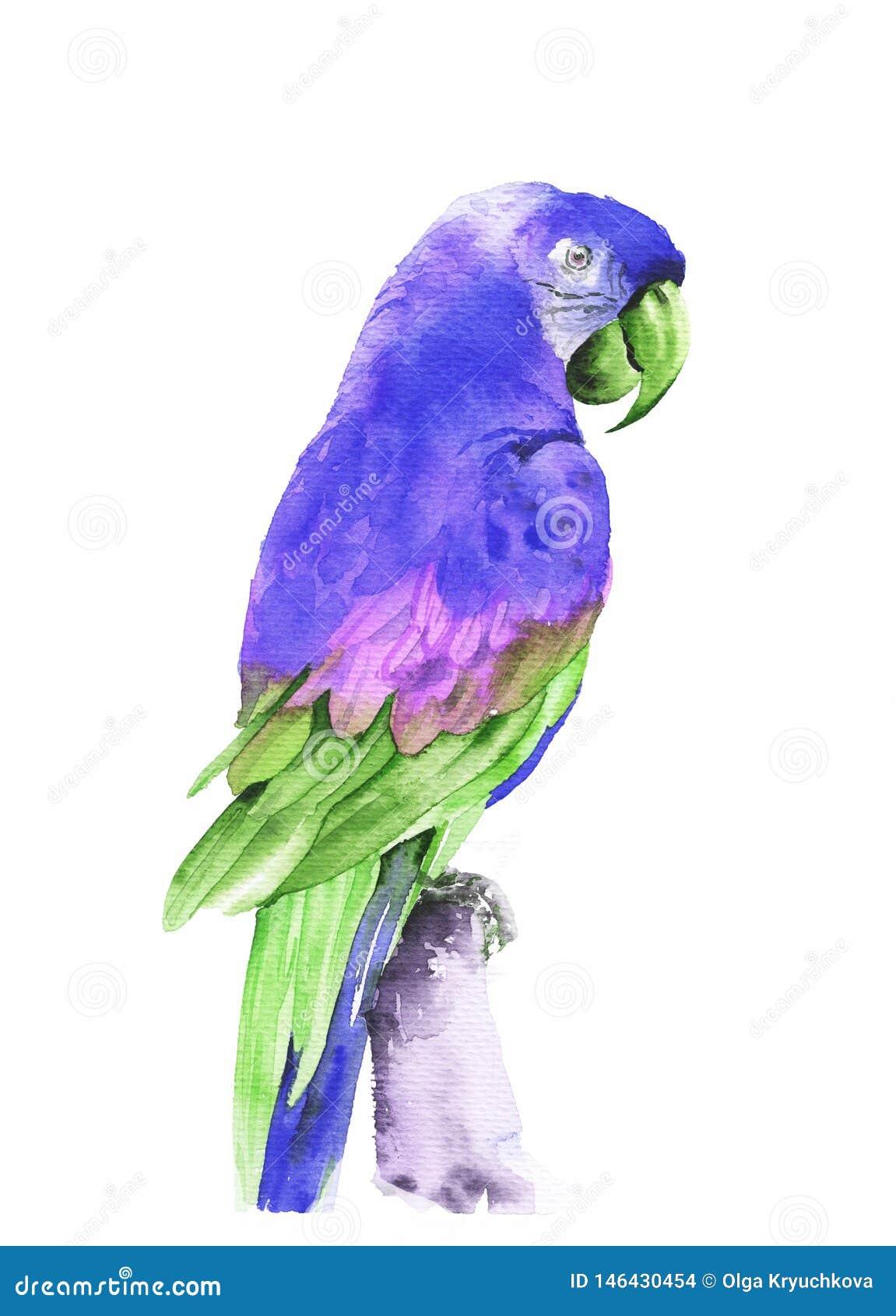 Flyga tropiska papegojamunkhättor Dragen illustration f?r vattenf?rg hand