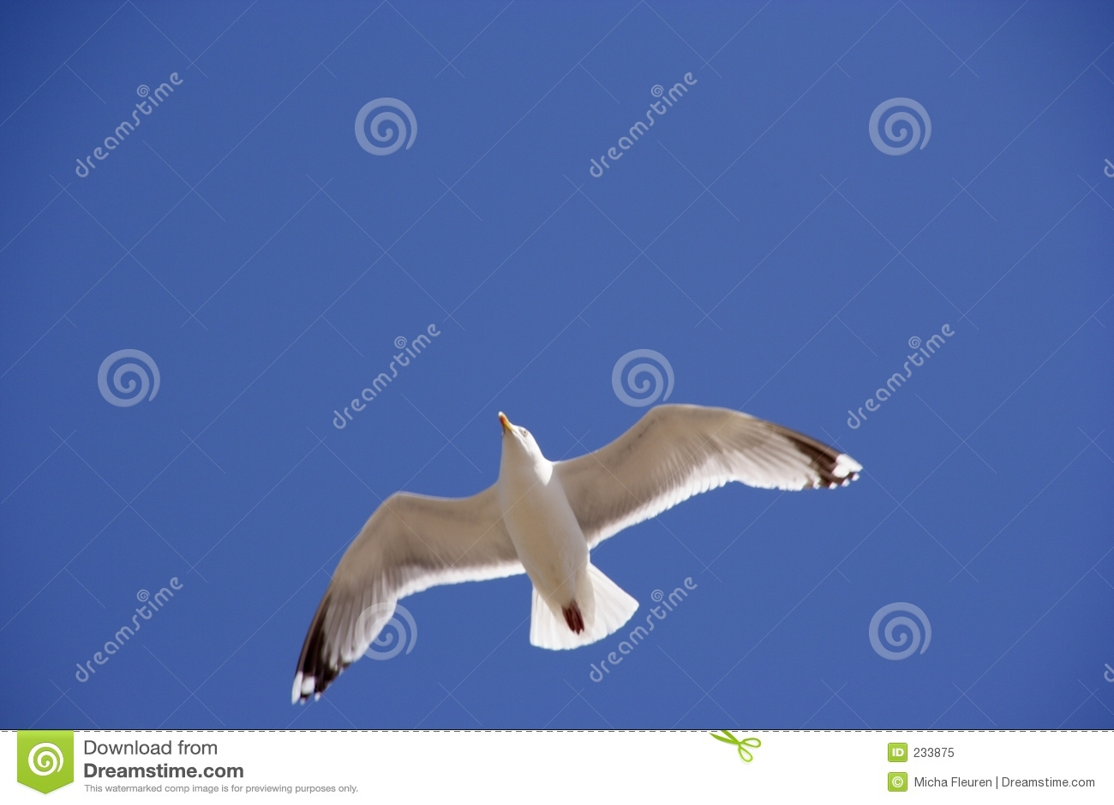 Flygseagull upp