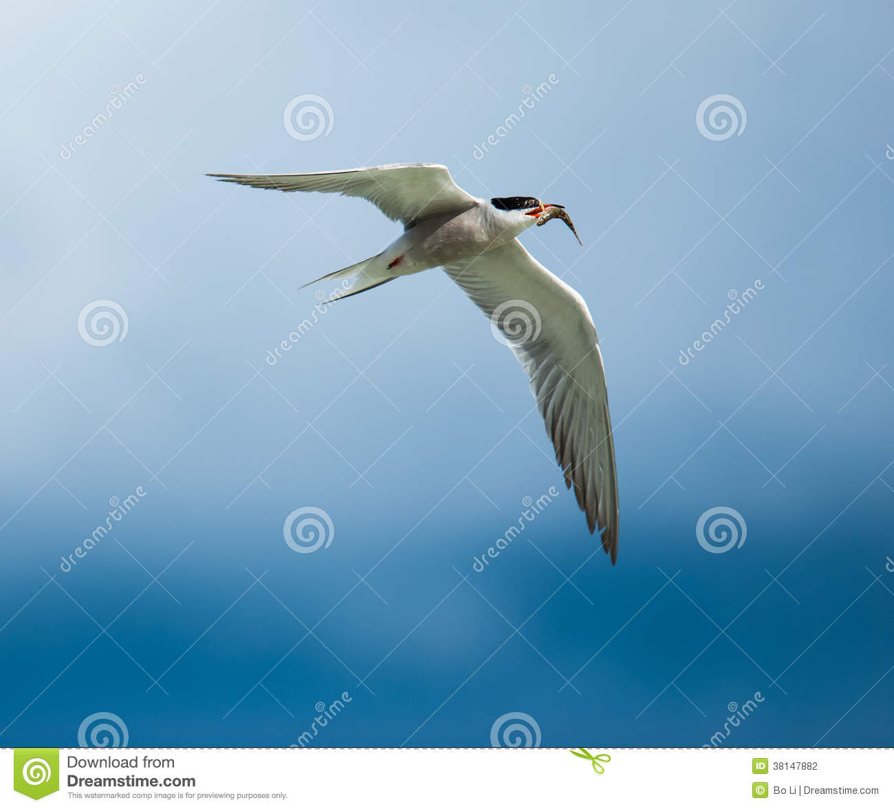 Stock Photography Flying Bird Image38147882