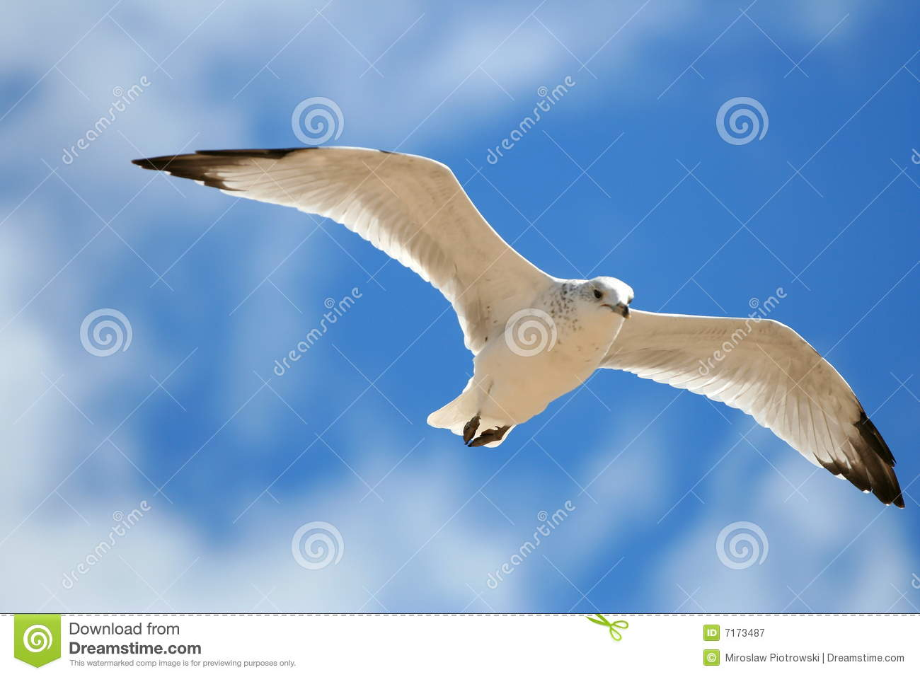Royalty Free Stock Photography Flying Bird Image7173487