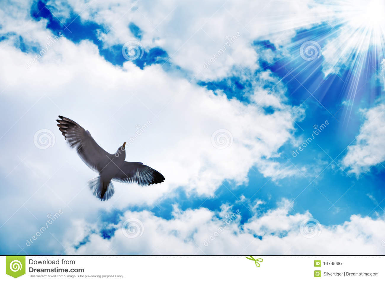 Flying Birds Free Stock Photos Download 3 416 Free Stock: Flying Bird And Blue Sky Stock Image. Image Of Heaven