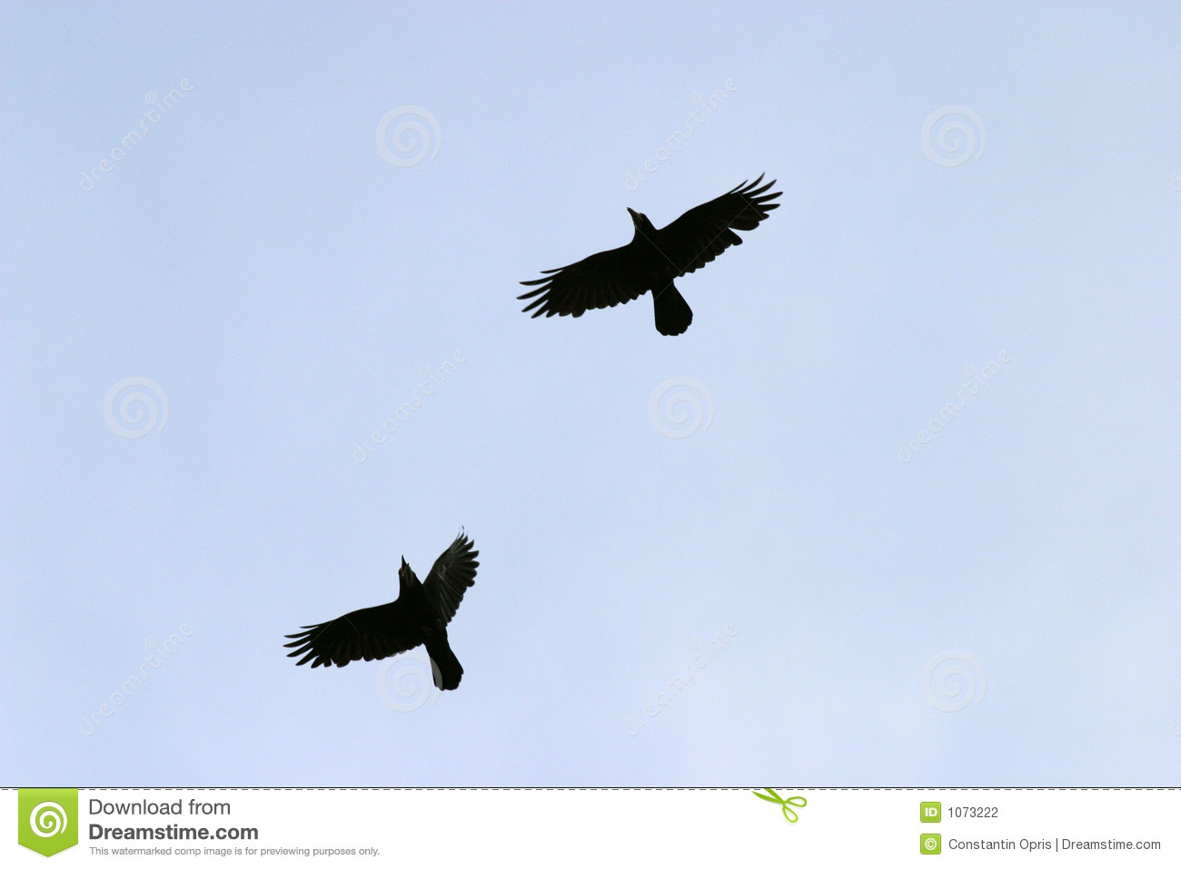 Stock Photography Flying Birds Image1073222