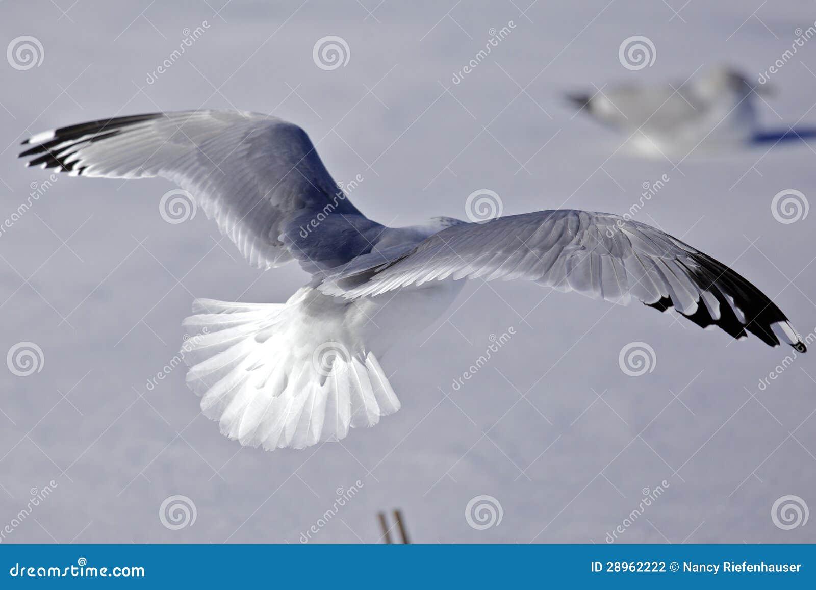Stock Photography Flying Birds Image28962222