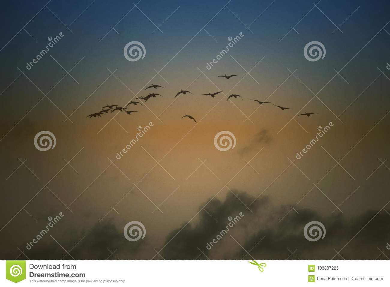 Flying Birds On A Blue And Golden Sky Wallpaper Stock Image Image