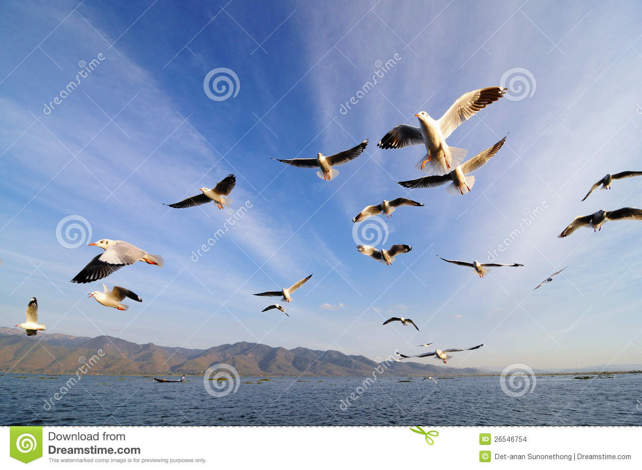 Flying Birds Free Stock Photos Download 3 416 Free Stock: Flying Birds In Blue Sky Stock Photo. Image Of Lake