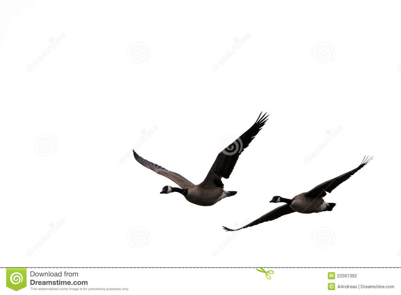 Stock Photography Flying Birds Windows Image22561392