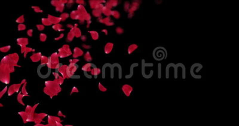 Flying Blurry Red Rose Flower Petals Falling Placeholder