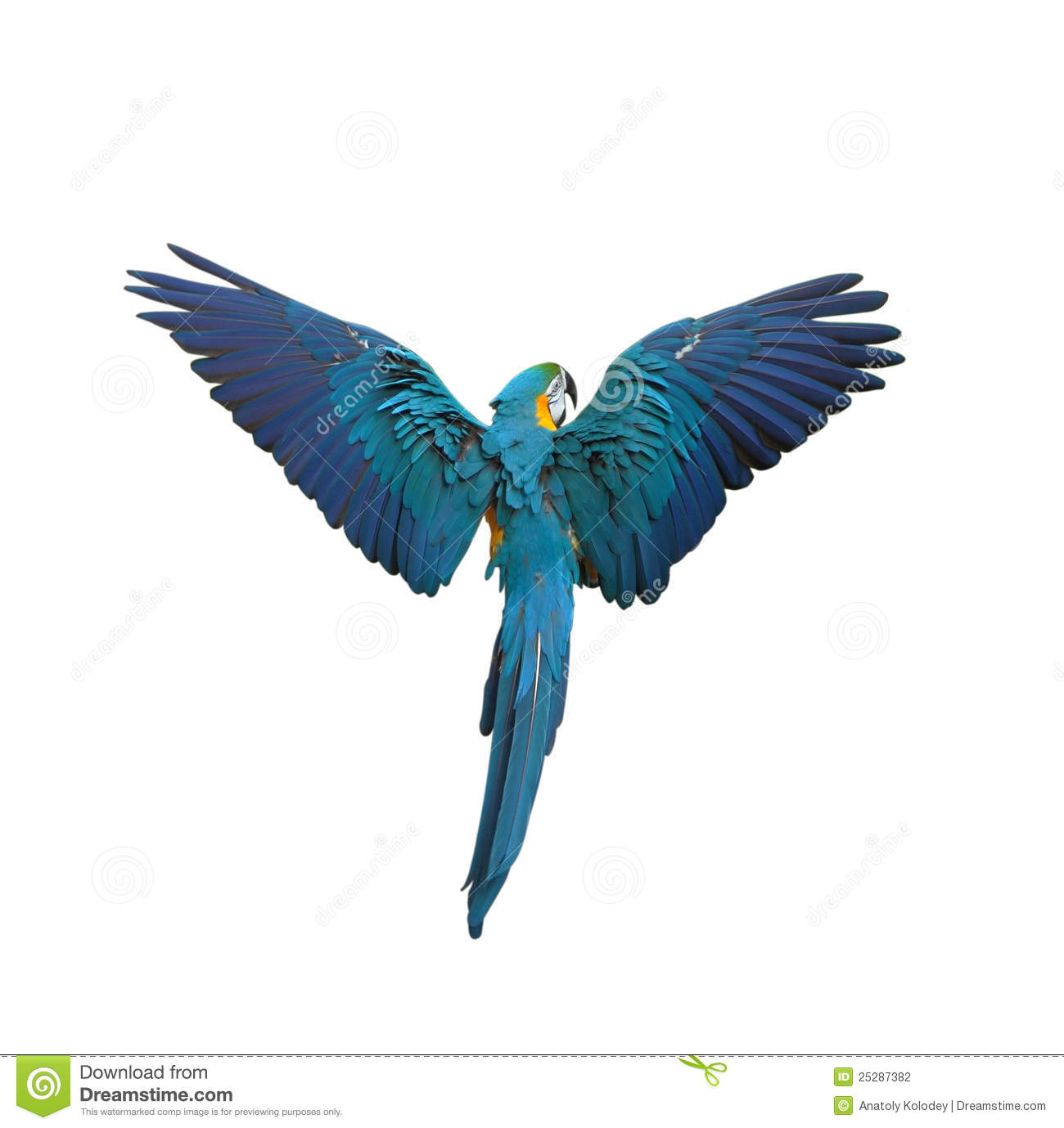 Flying Bird Sketch Stock Images RoyaltyFree Images