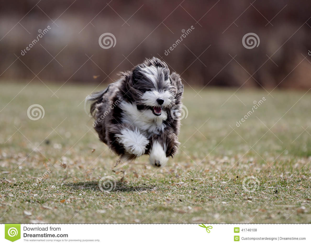 Download The flying dog. stock photo. Image of hurry, legs, activity - 41746108