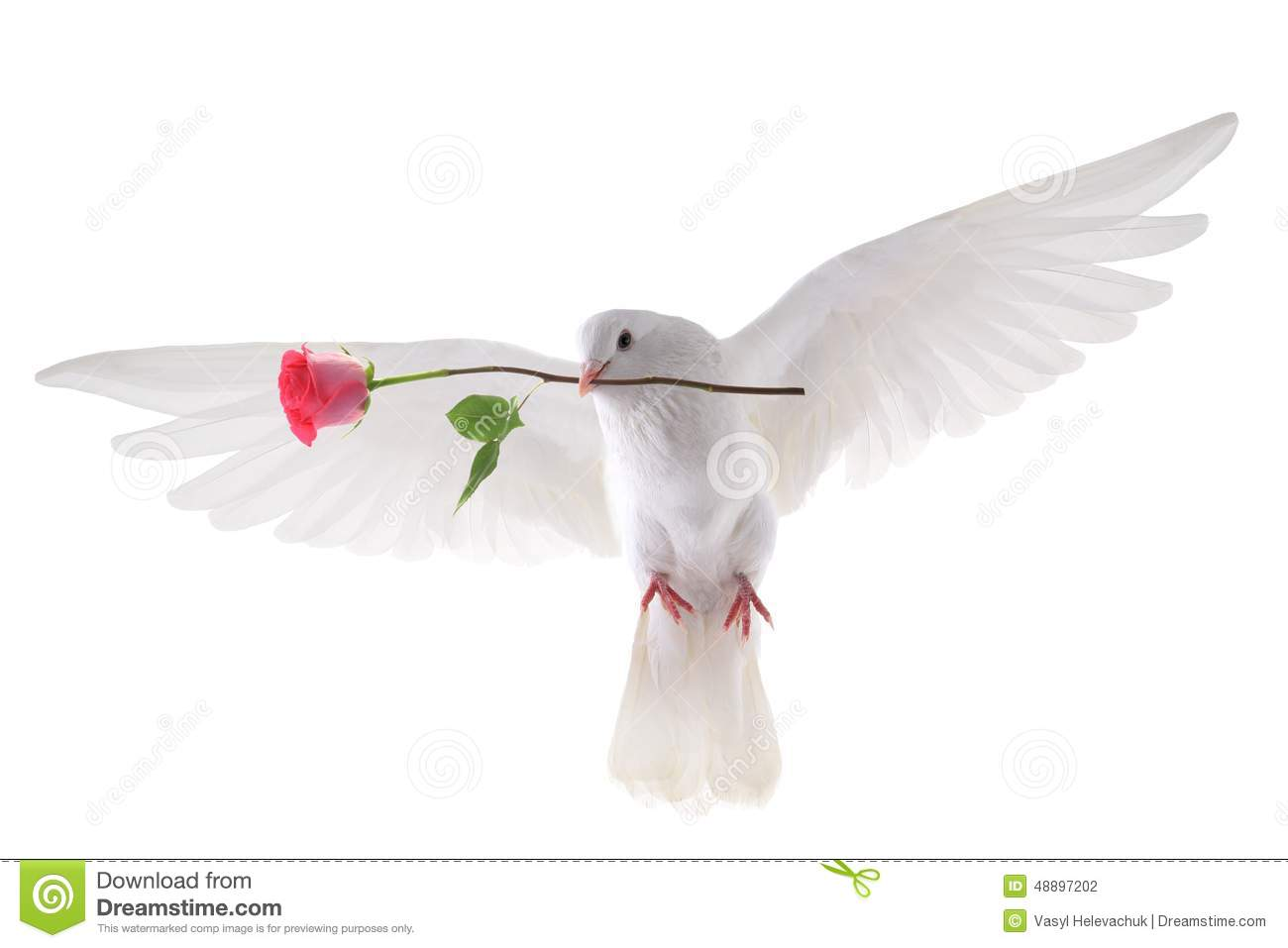 Flying Dove Stock Photo Image 48897202