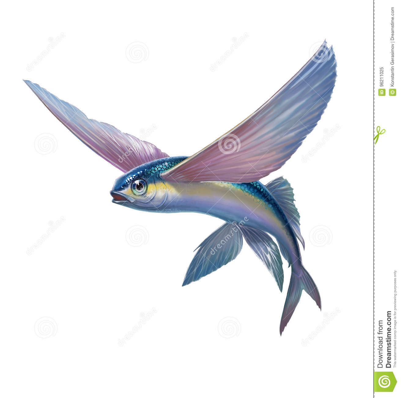 flying fish jumping on whit stock illustration illustration of
