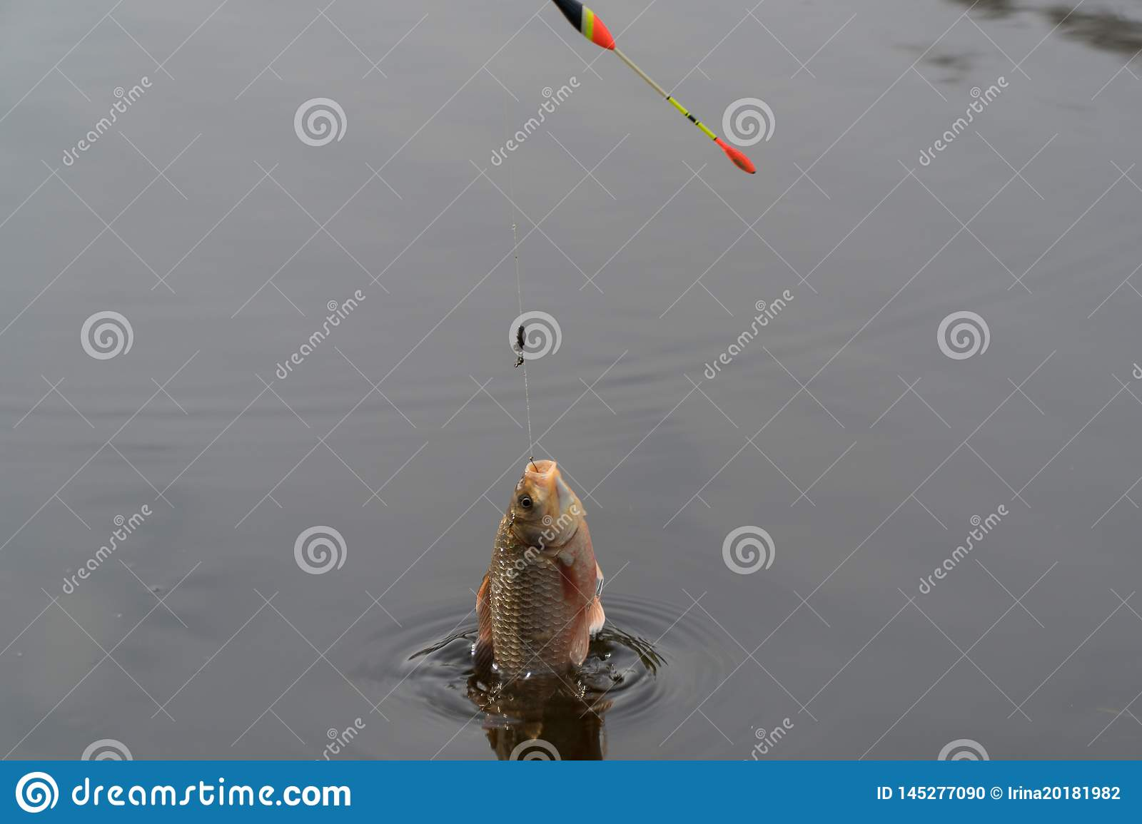 Flying fish over the river