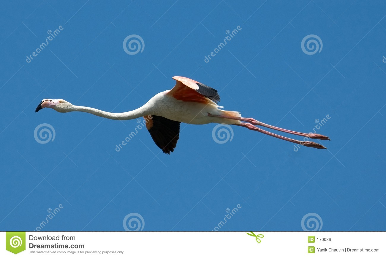 flying flamingoes ii by - photo #35
