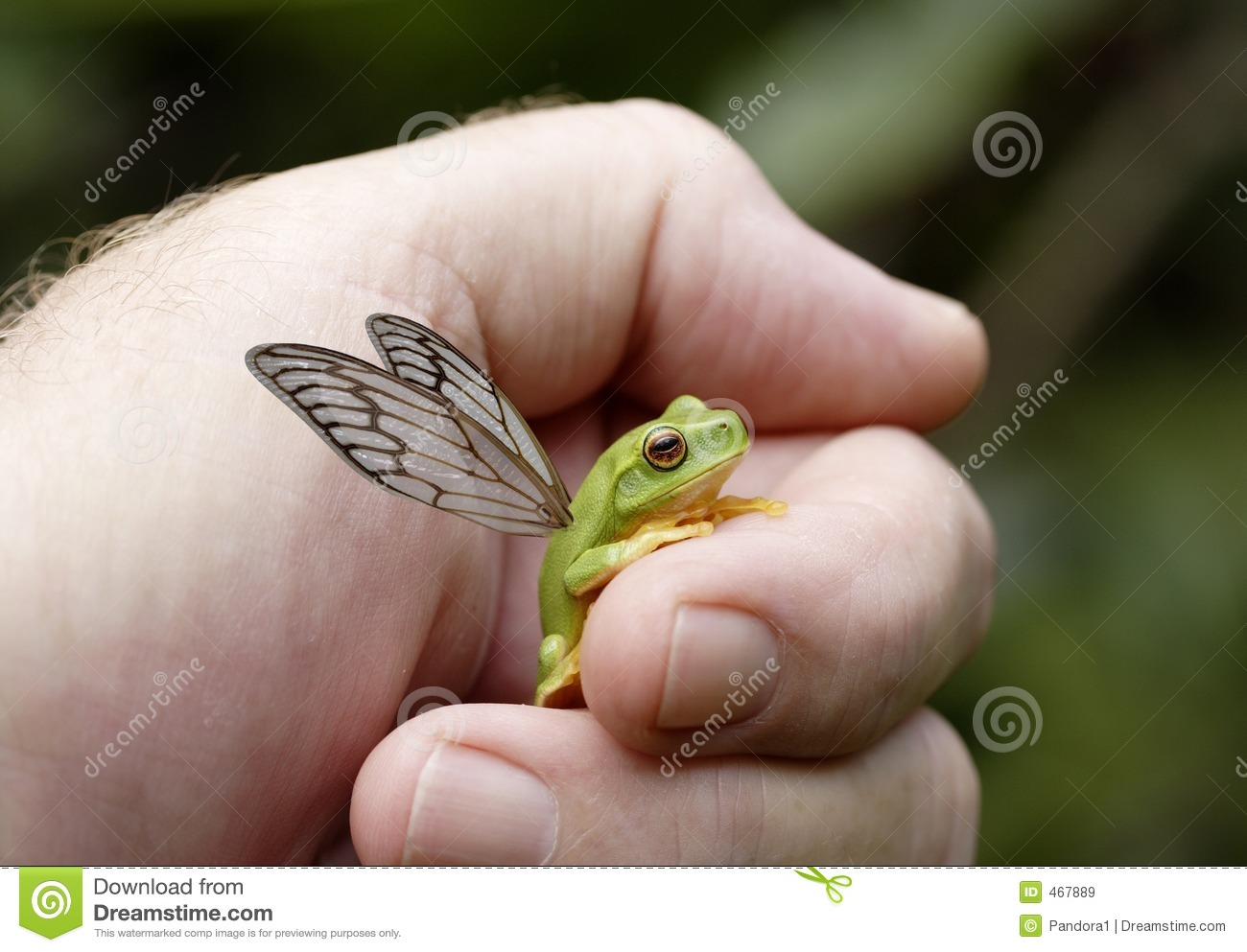 Download Flying frog stock image. Image of environment, fragile - 467889