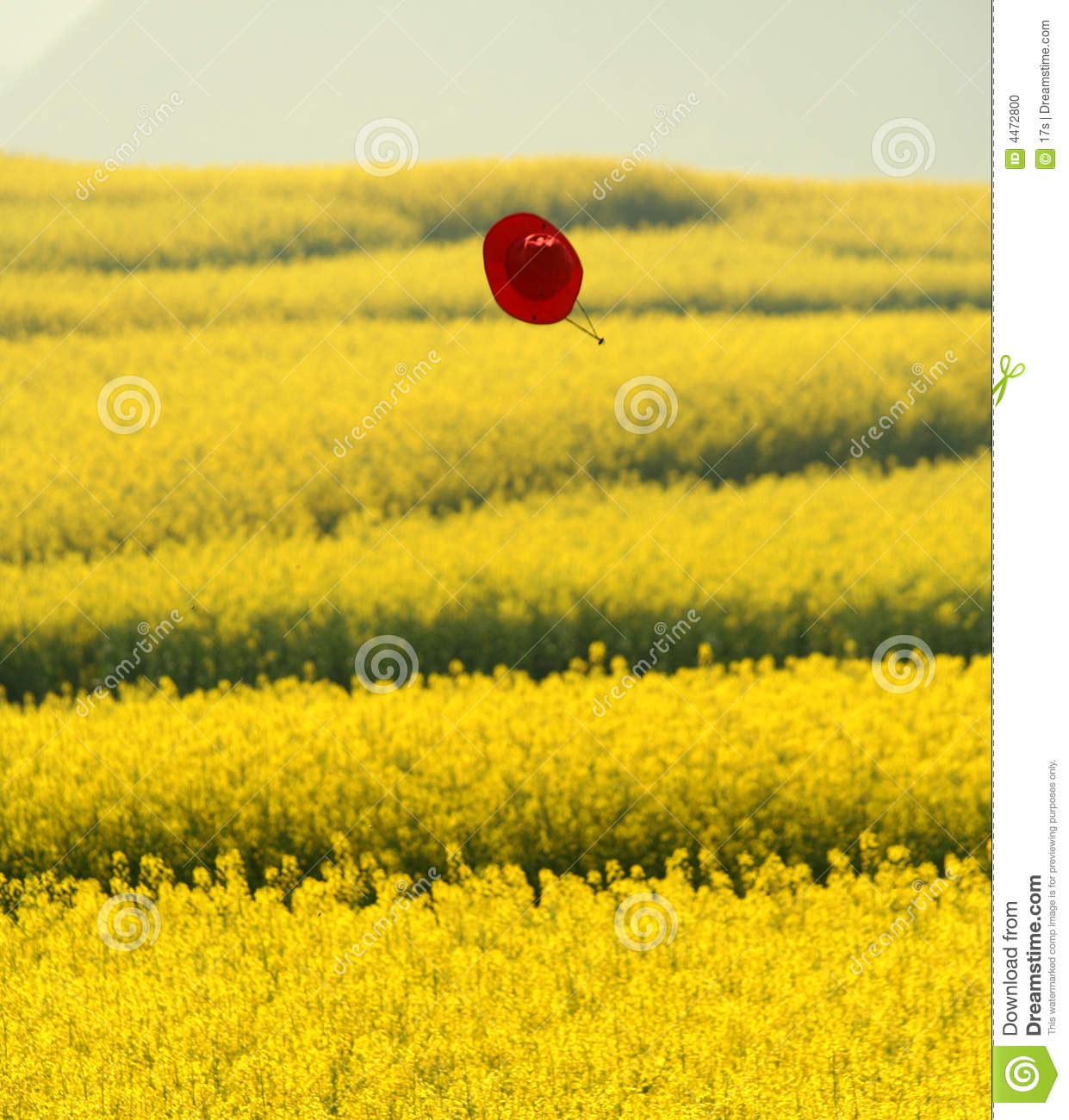 Flying hat over flowers field