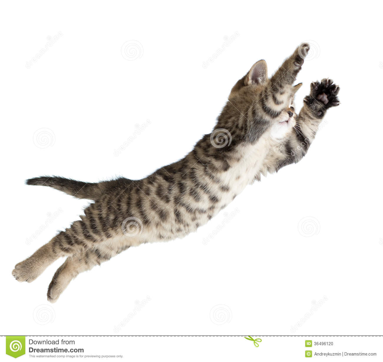 Flying Or Jumping Kitten Cat Isolated Stock Photo - Image: 36496120