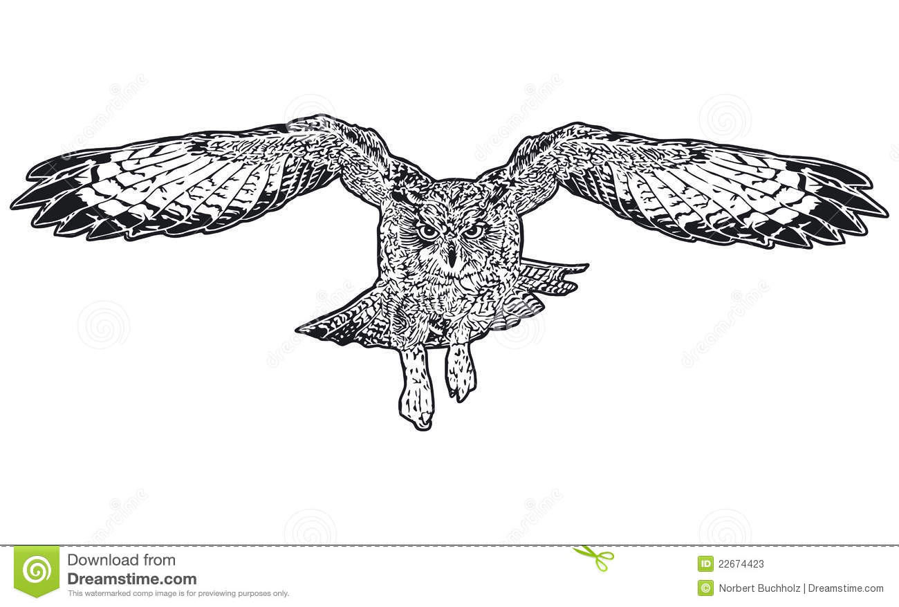 royalty free stock photo download flying owl