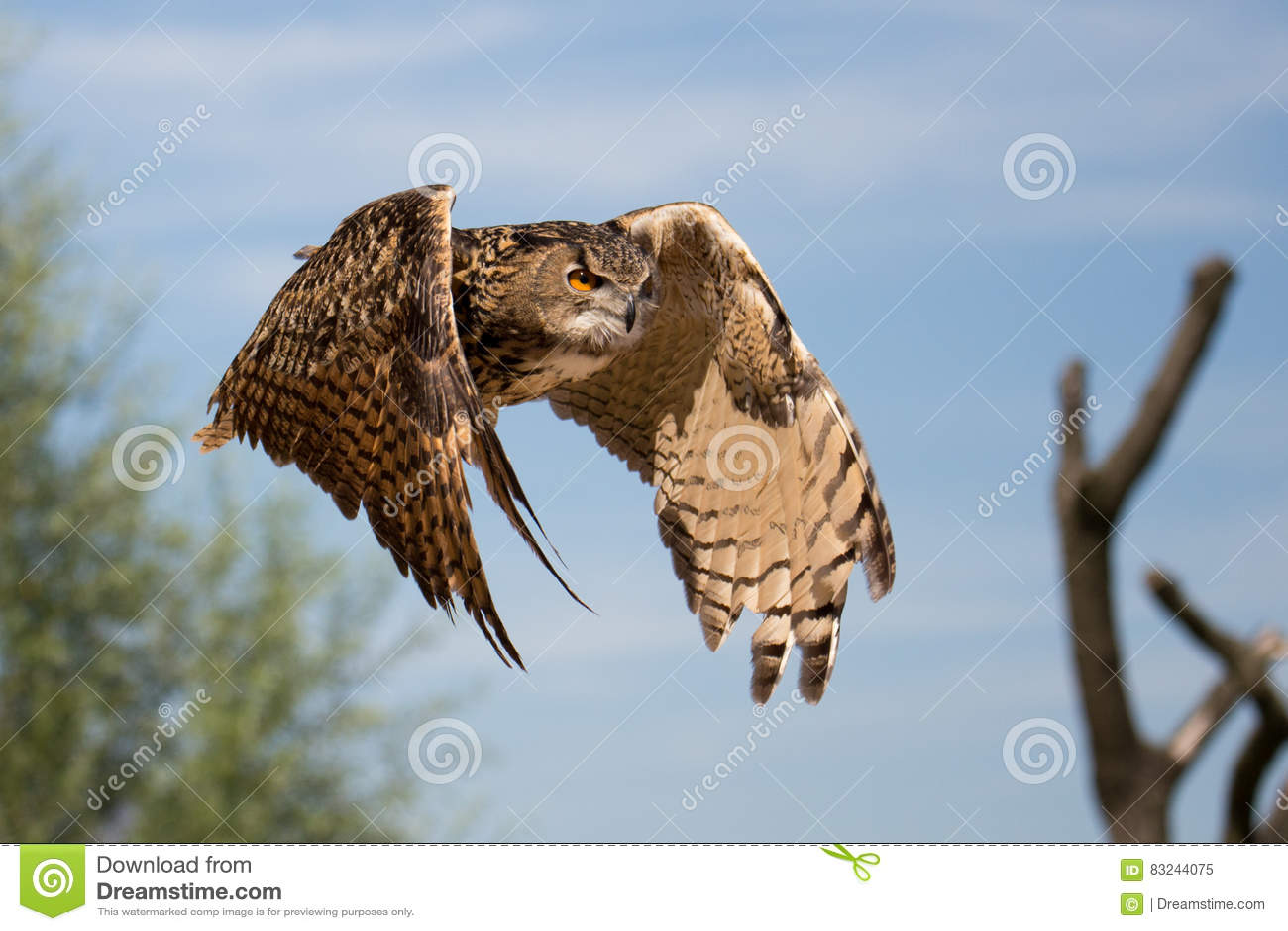 A flying owl in zoo