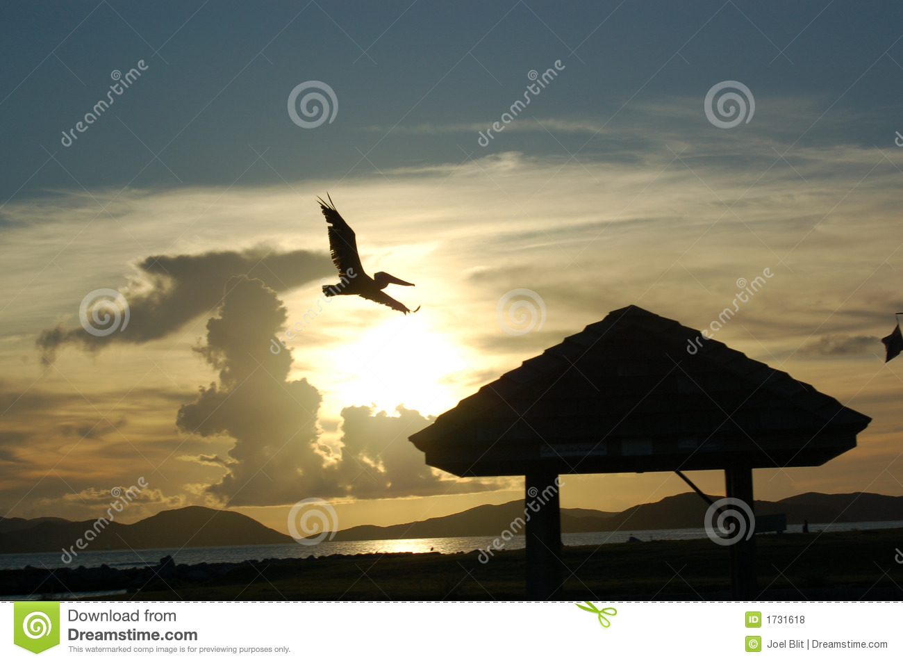 Flying Pelican at sunset
