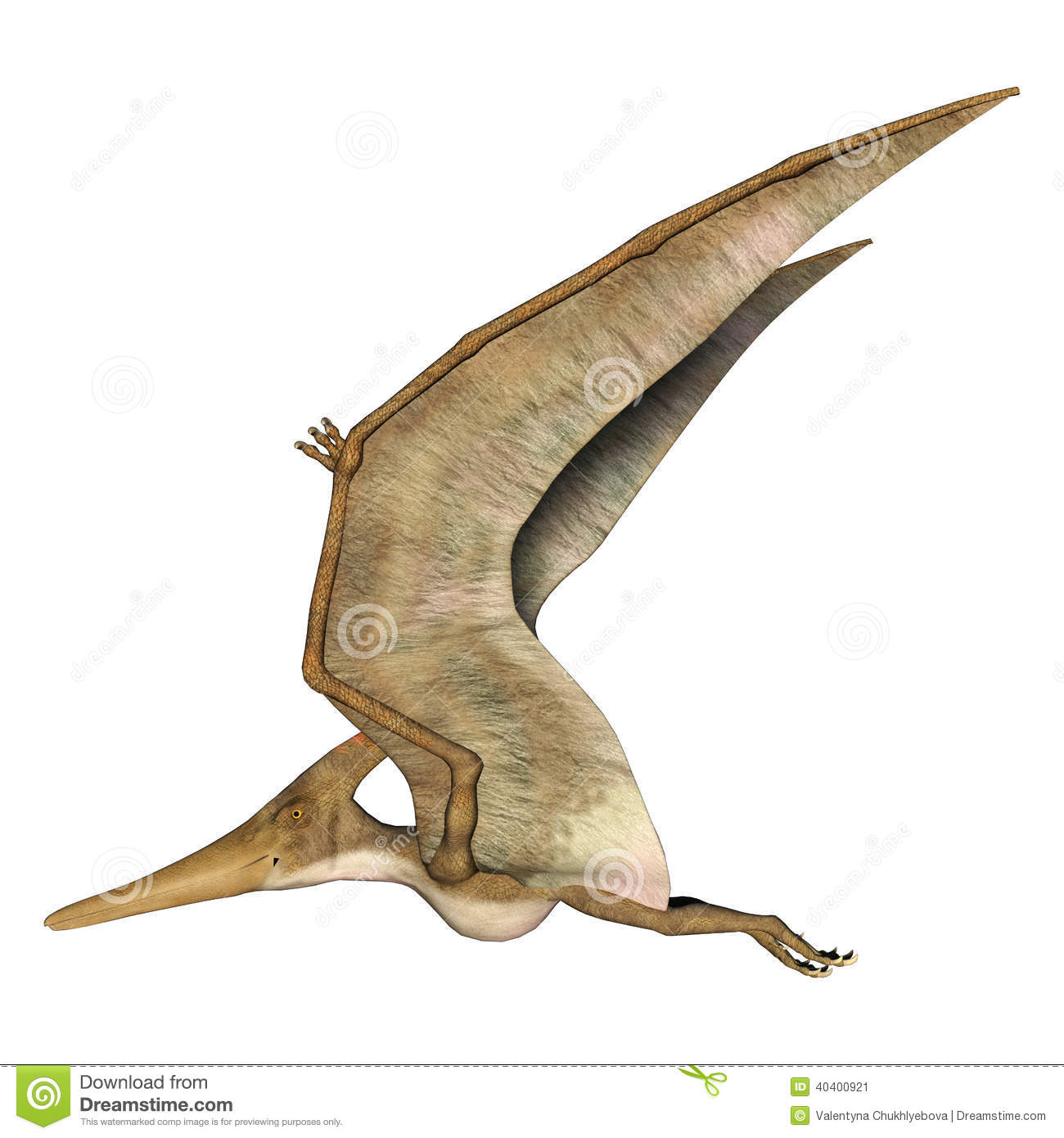 pteranodon stock photos images pictures 403 images