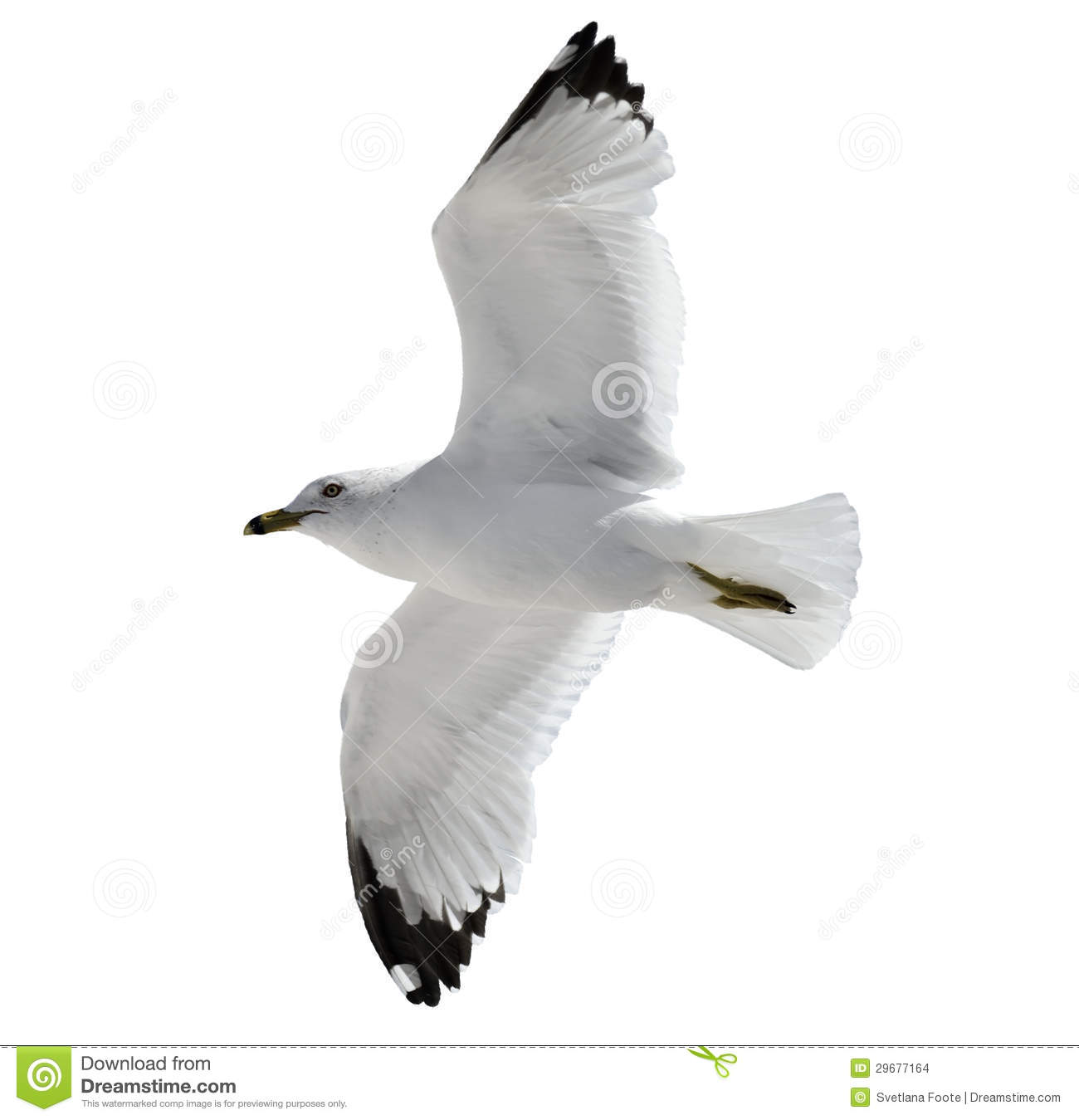 Flying Seagull Stock Images - Image: 29677164