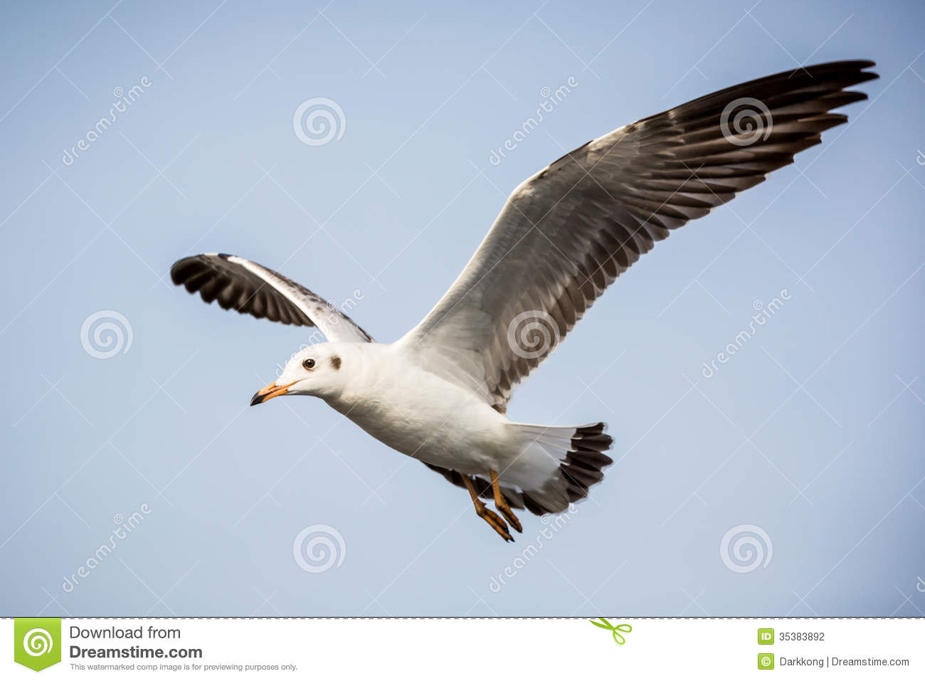 Flying Seagull Stock Photography - Image: 35383892