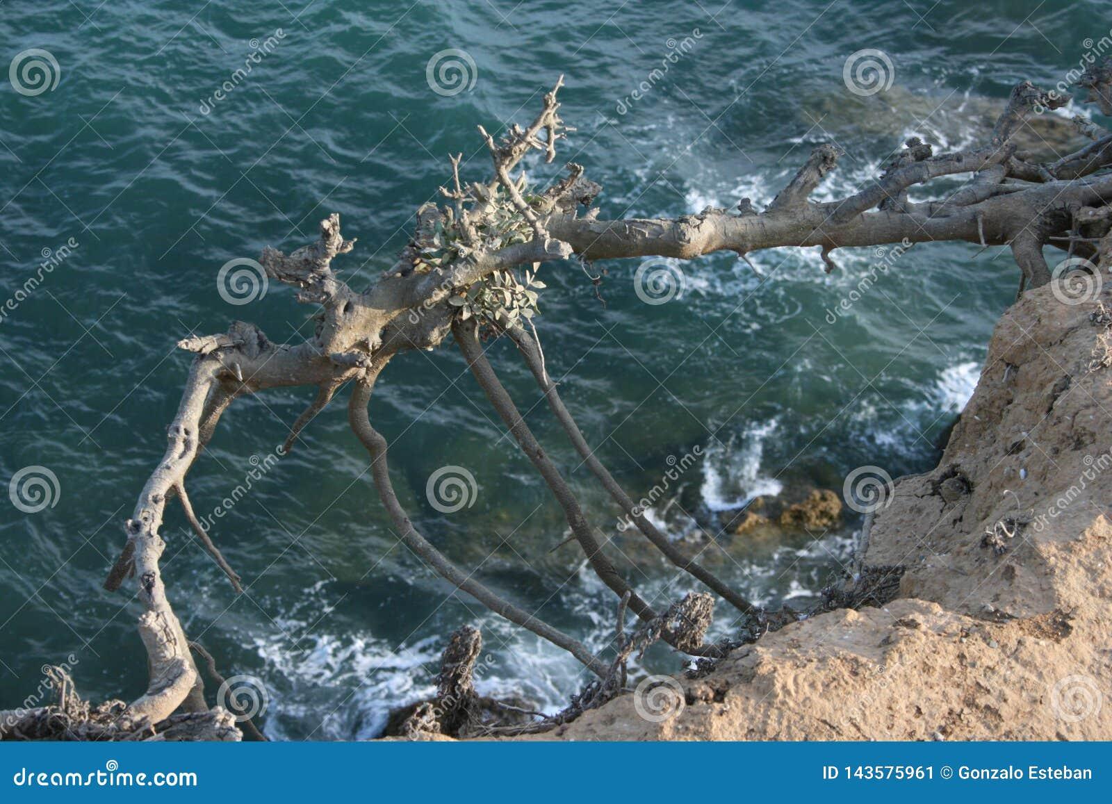 Flying tree over the ocean