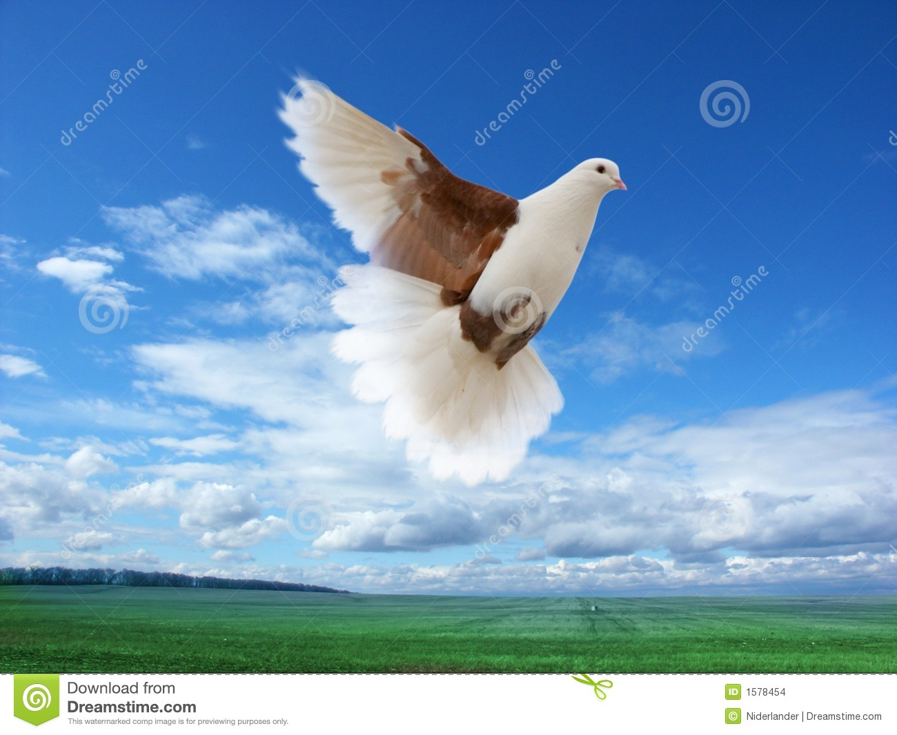 Two white pigeons flying
