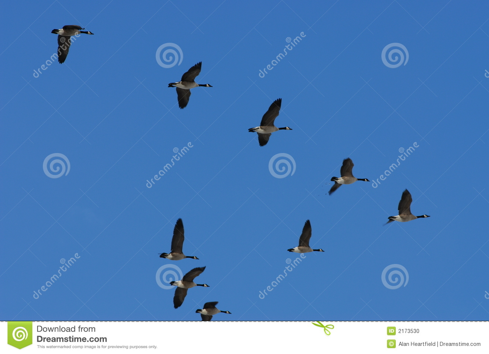 Flyttningsfjäder