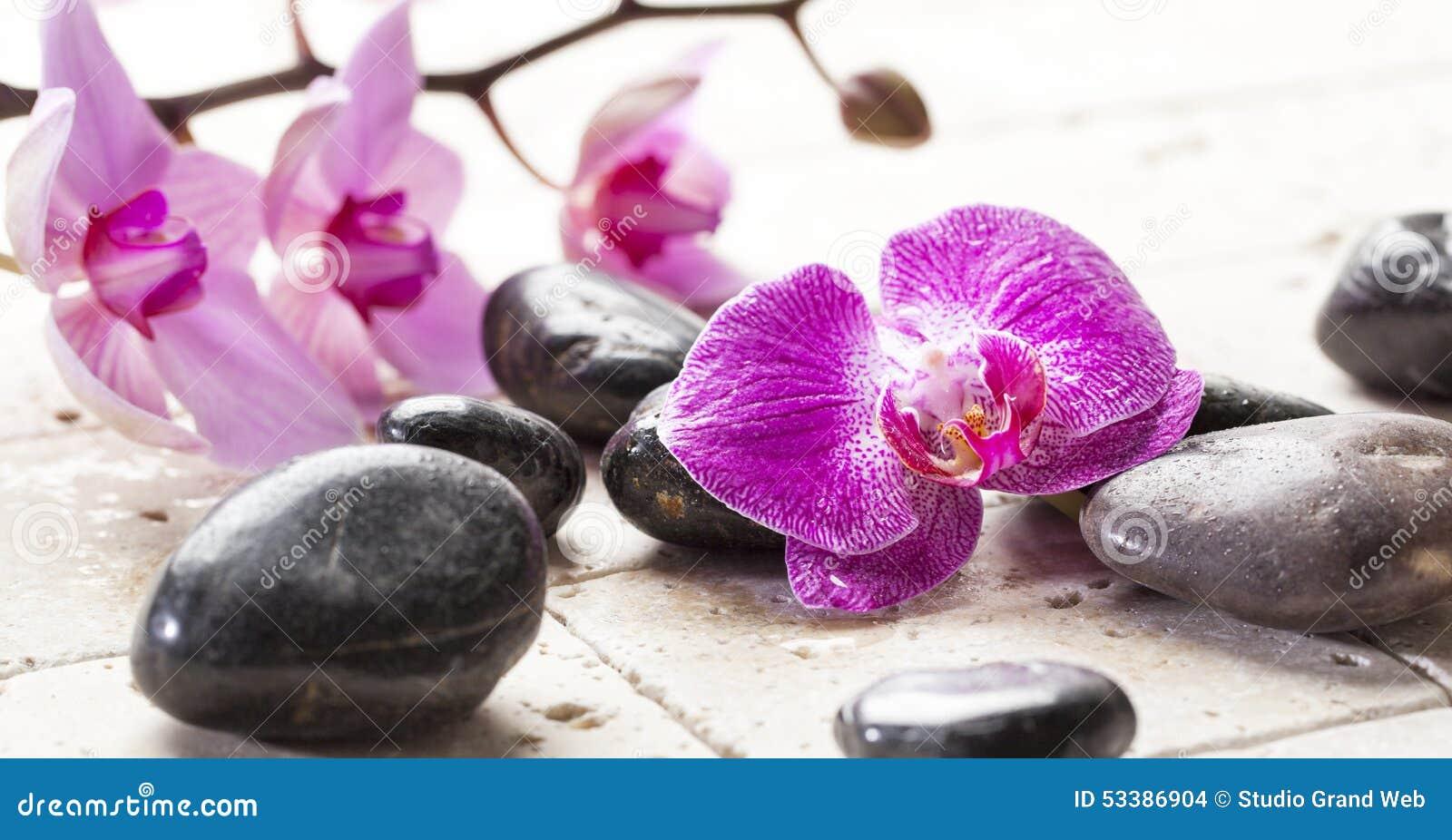 Féminité de zen avec des fleurs d orchidée et des pierres de massage