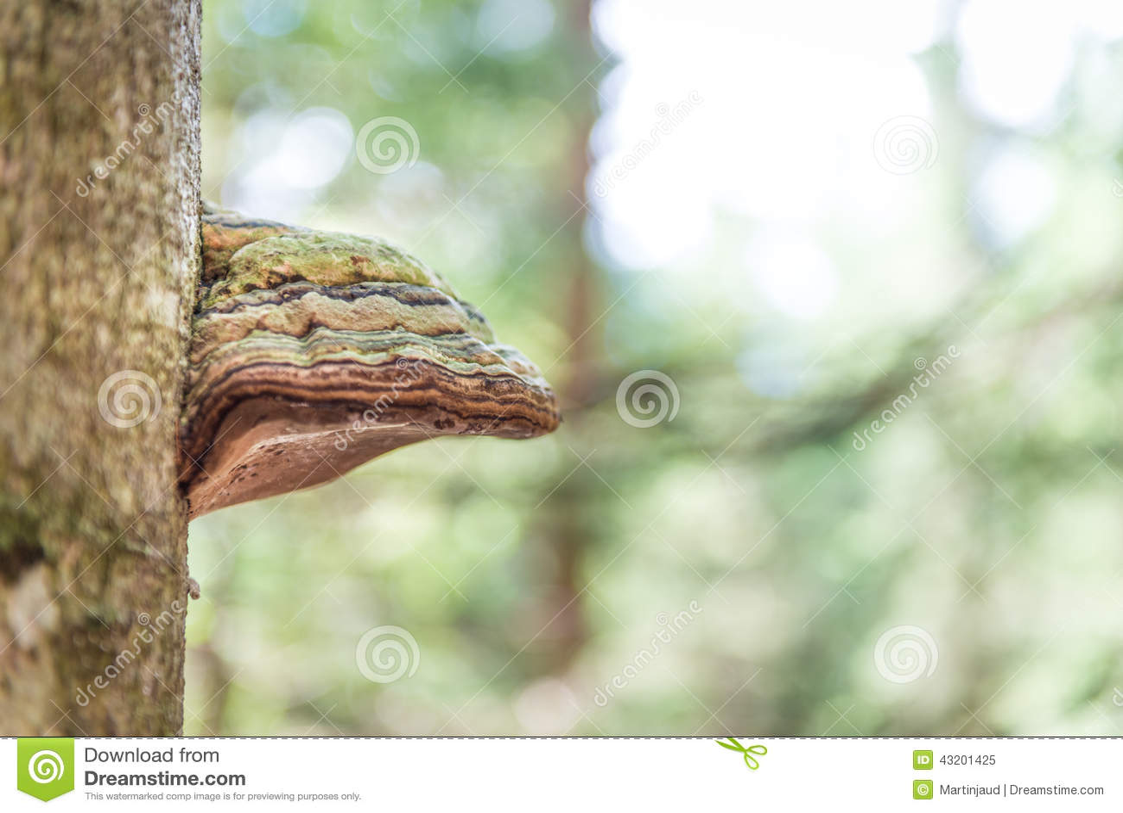 Download Fnöskesvamp på en trädstam fotografering för bildbyråer. Bild av closeup - 43201425