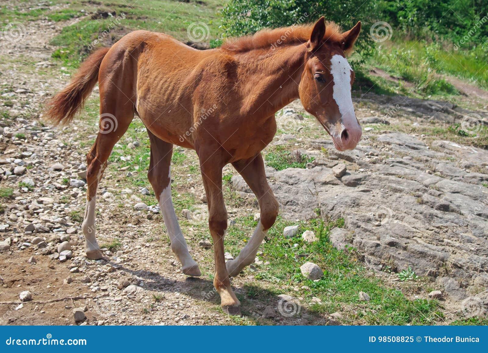 Foal Επισήμανε λίγο άλογο