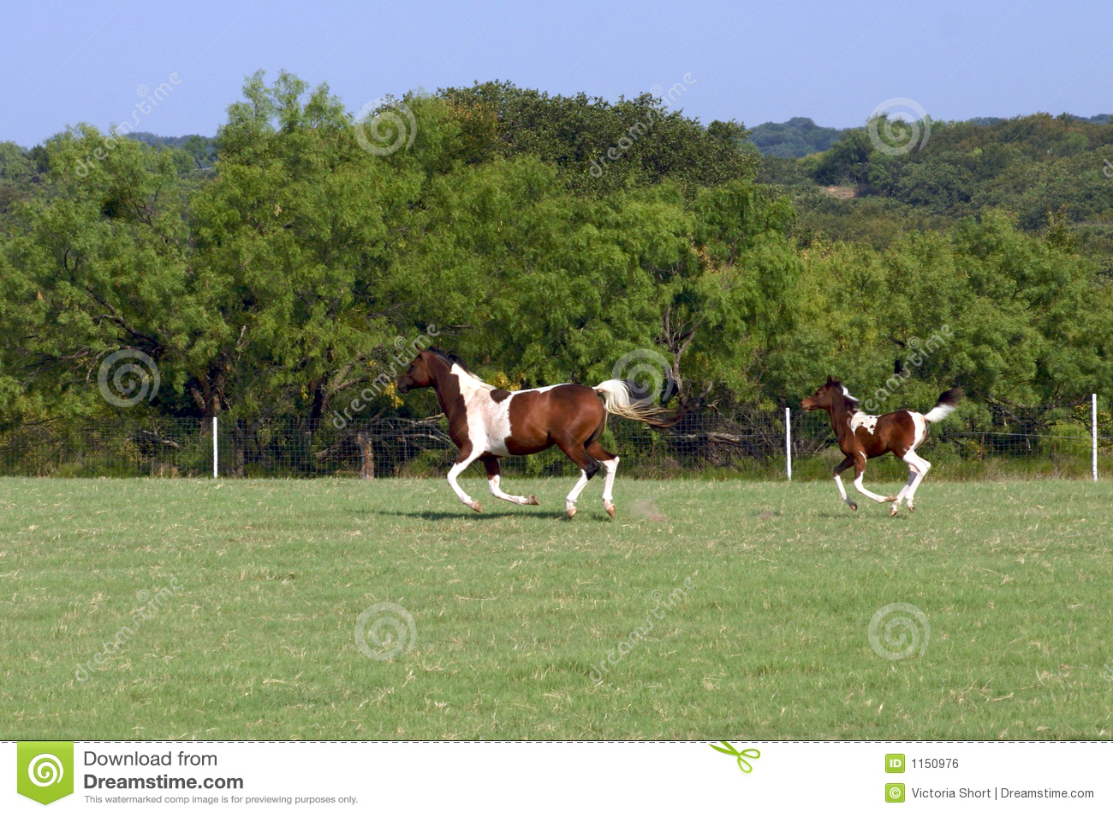 Foal τρέξιμο φοράδων