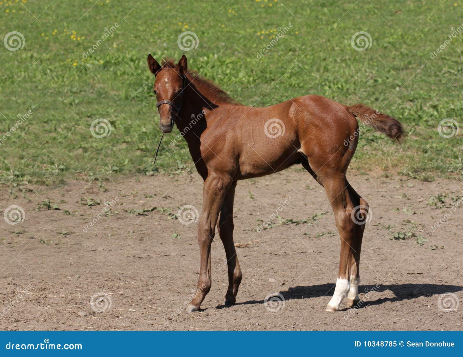 Foal 10