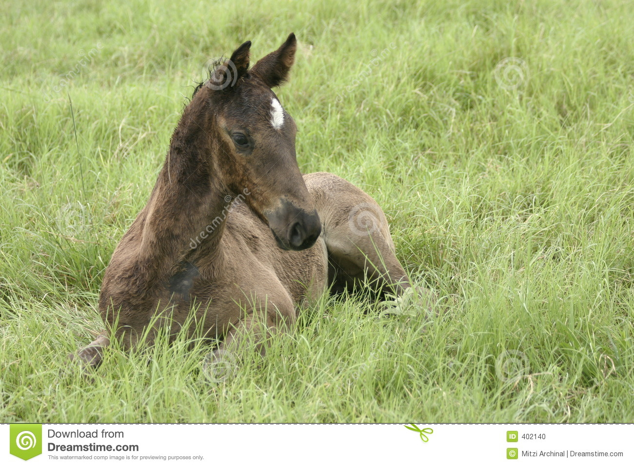 Foal in the grass