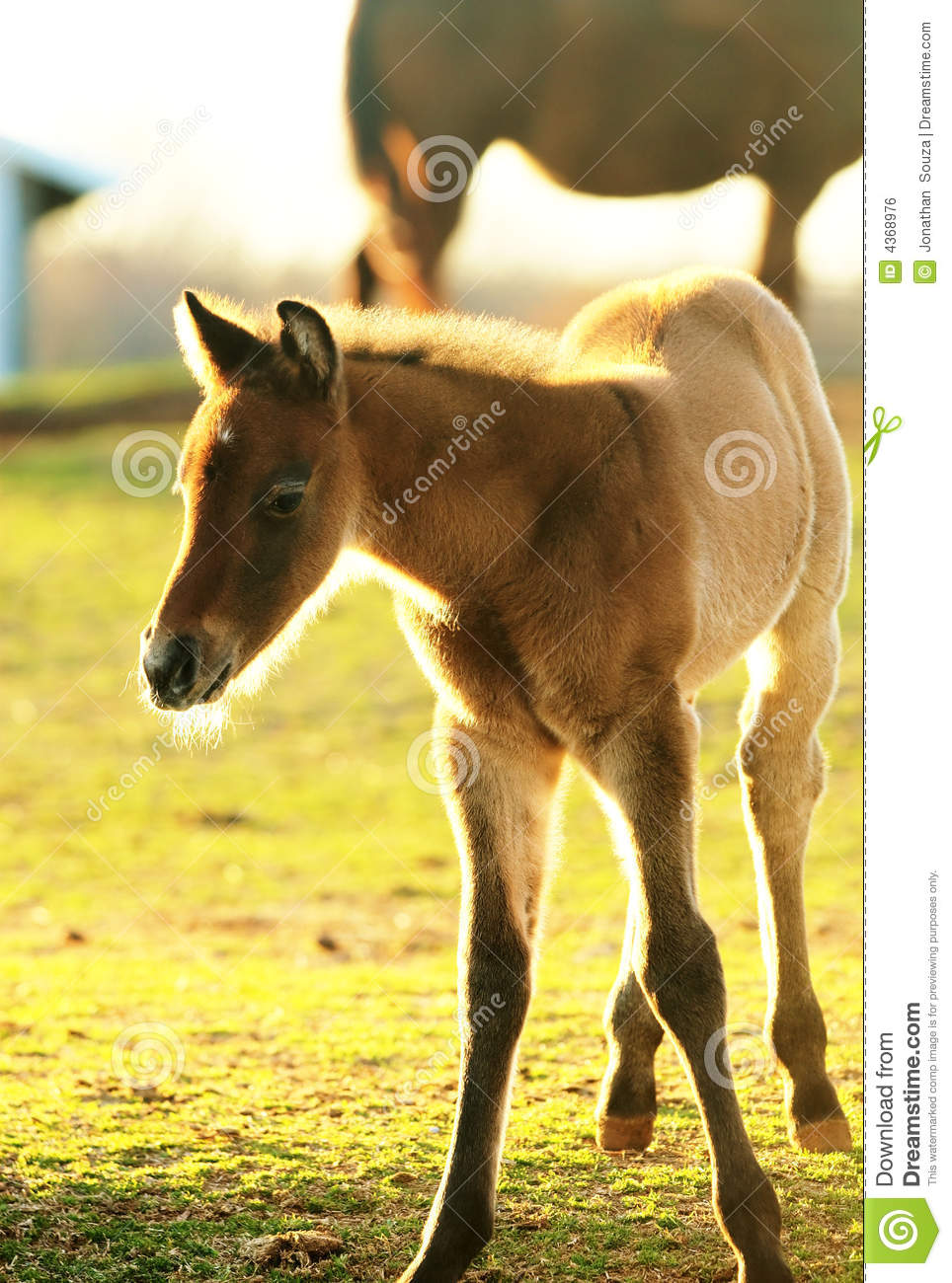 Foaling around