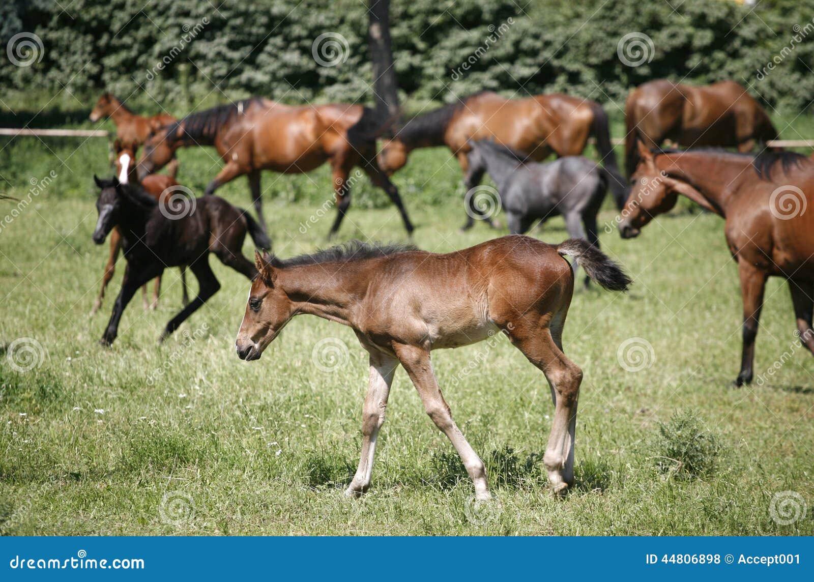 Foals και φοράδες