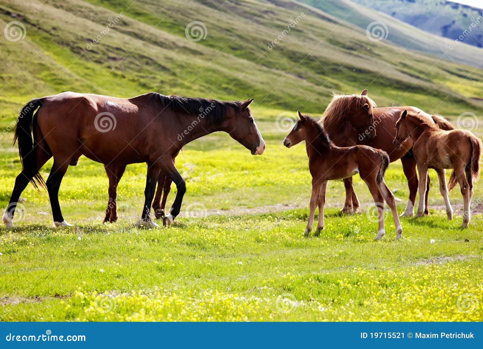 Foals φοράδες