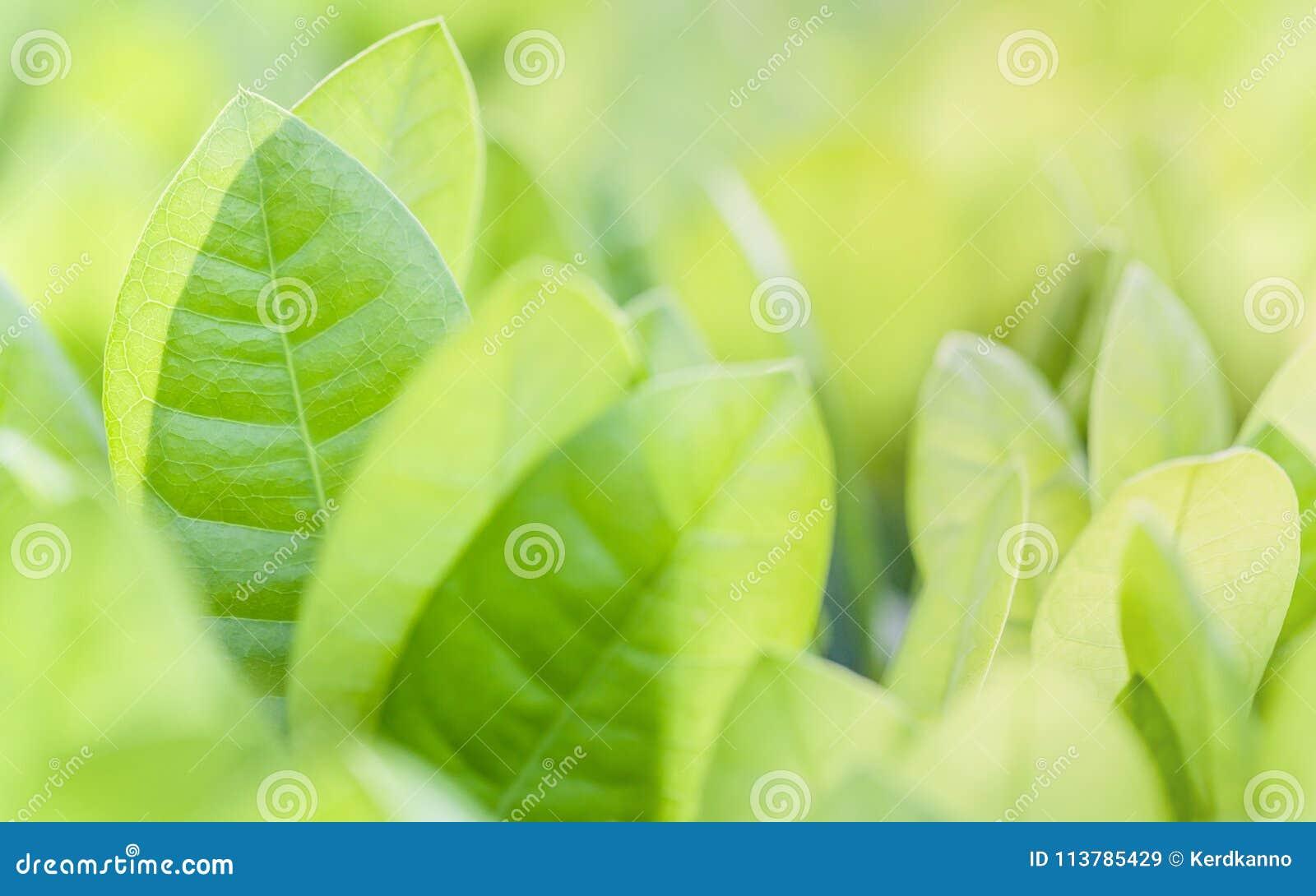 Foco ascendente e macio do fim das folhas verdes Fundo verde da natureza