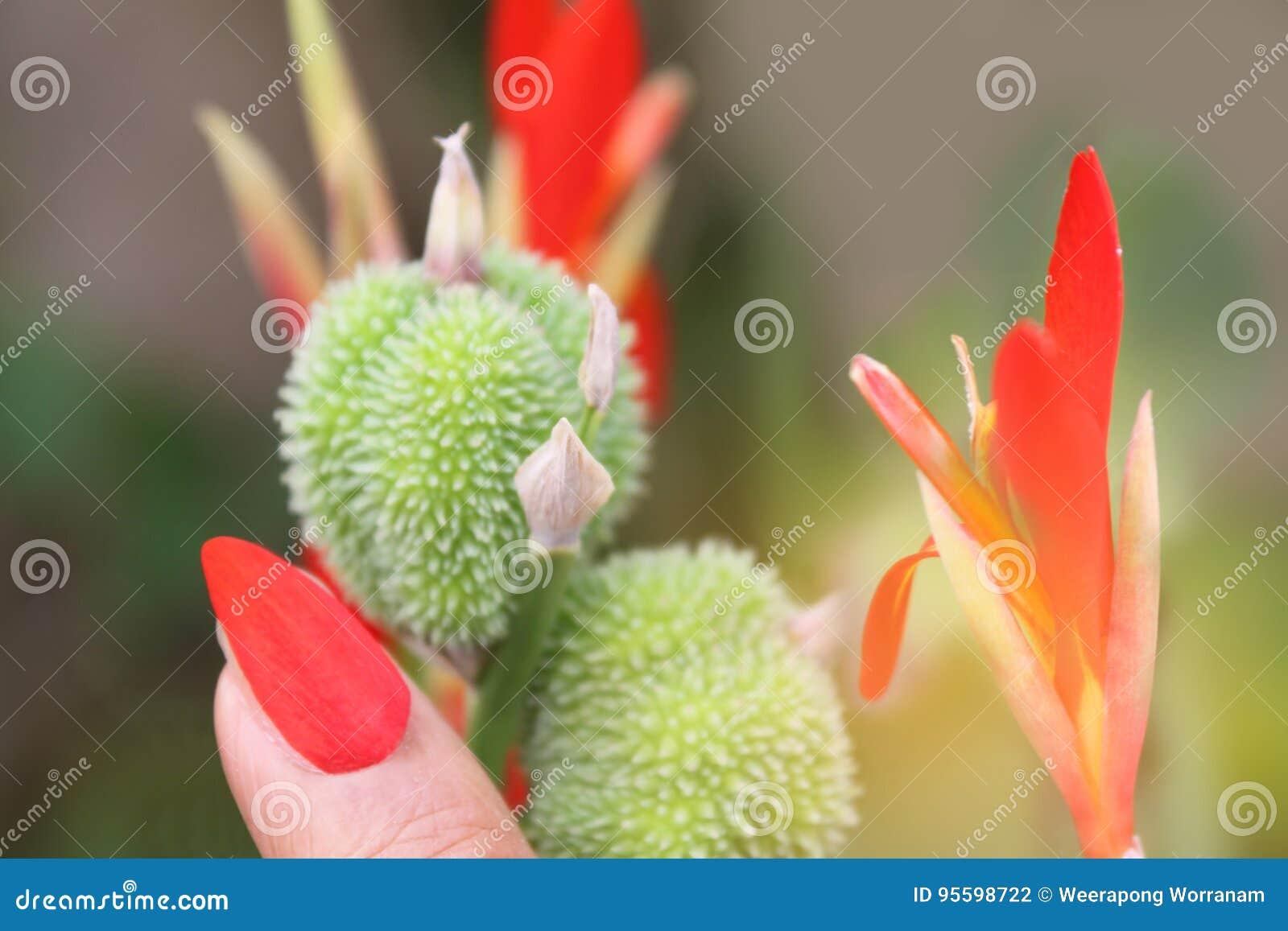 Lujoso Flor De Lis De Uñas Imagen - Ideas Para Pintar Uñas - knxc.info