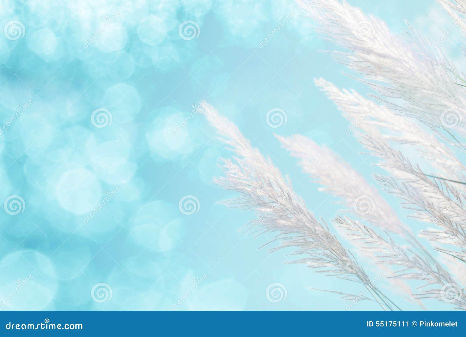 Foco macio abstrato do fundo azul fresco da grama da pena do softness da iluminação