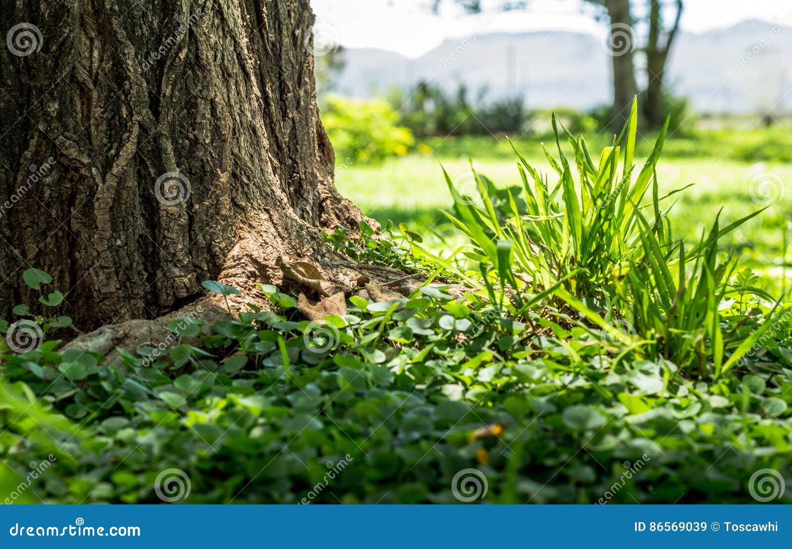 Focus on green grass clump and weeds closeup next to tree