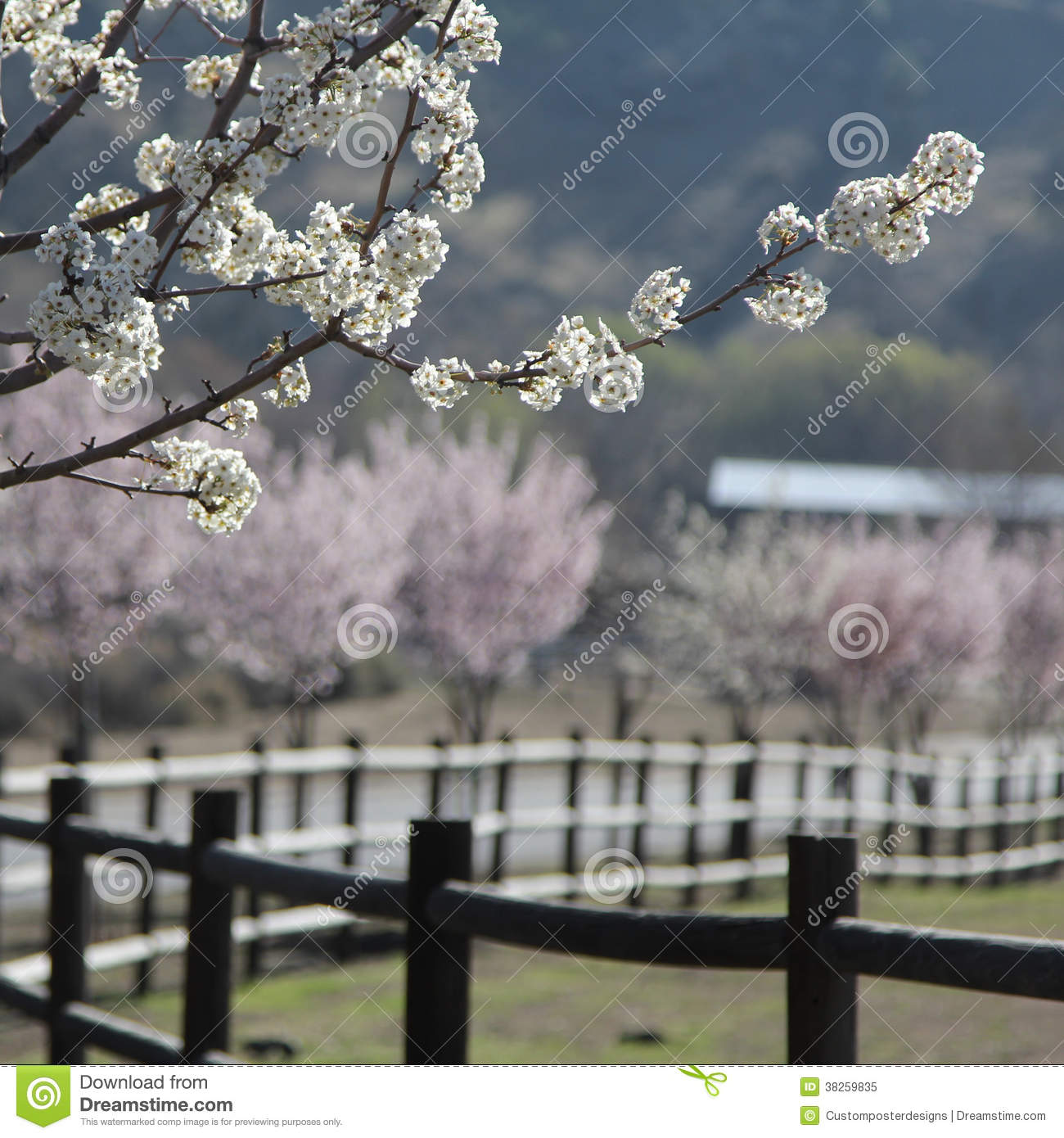 Download Focused Trees Flowering With A Blurred Background. Stock Image - Image of tree, trees: 38259835