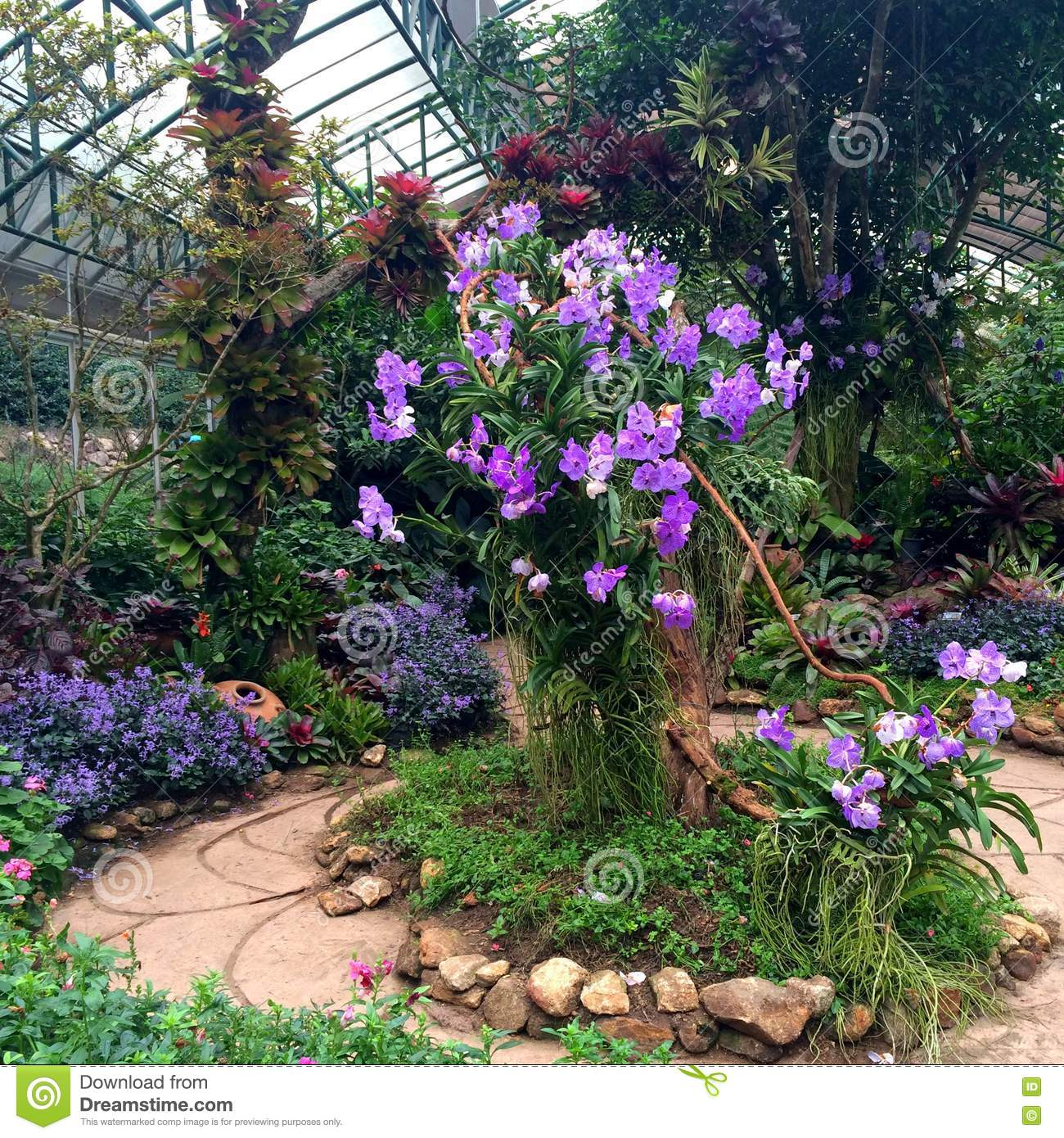 Focusing on a big tree with purple orchid in the green house garden